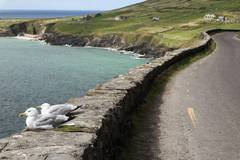 Trip/Tour: Ireland's mild south